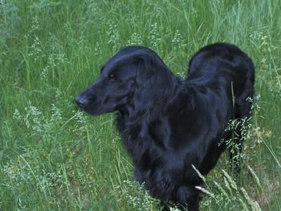 Hörnan2008-06 012