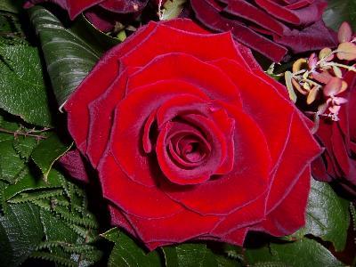 roselight.jpg